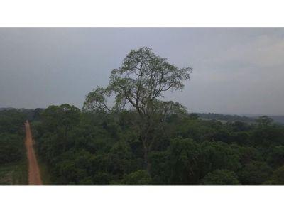 Aprueban ampliar la   Ley de Deforestación Cero  por 10 años