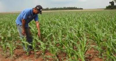 Microseguro agrícola como respaldo para pequeños productores