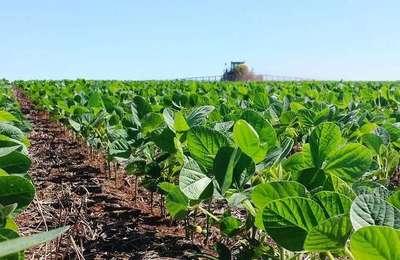 La agricultura es la única forma que se tiene para salir del déficit financiero