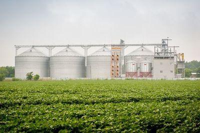 Precipitaciones ayudaron al buen desarrollo de la soja