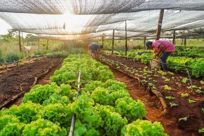 MDS inyectó a la economía del sector vulnerable más de G. 340 mil millones