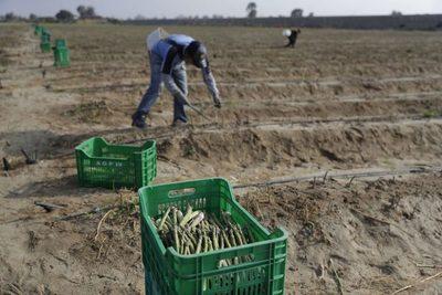 """""""Esclavos"""" de la boyante agroindustria exportadora del Perú"""