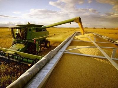 Precios de los granos hacen una tregua luego de seis meses de subas consecutivas