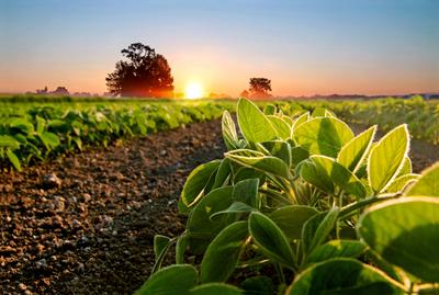 La soja está en buenas condiciones y el panorama será positivo si continúan las lluvias