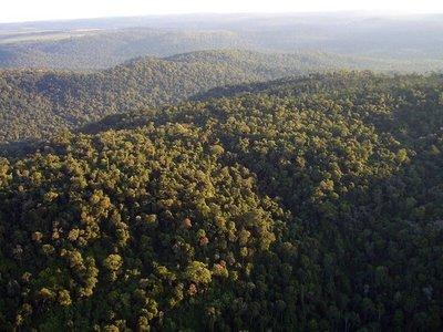 Vaticinan aprobación de Ley de Deforestación Cero