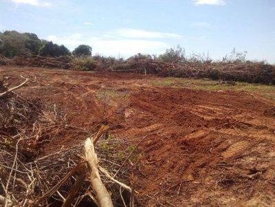 Esperan que Diputados apruebe ley de «deforestación cero» este miércoles
