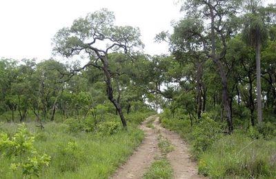 Diputados definen hoy la suerte de los bosques de la Región Oriental