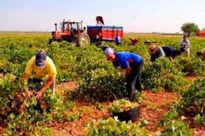 Producción agrícola será un factor importante para la economía 2021