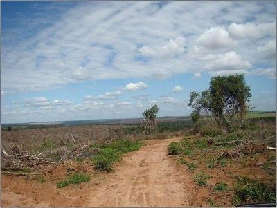HOY / Ley de Deforestación Cero: Abdo anuncia la promulgación de la extensión por 10 años
