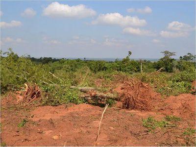 Mario Abdo anuncia promulgación de Ley de Deforestación Cero este jueves