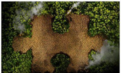 Deforestación Cero por 10 años más fue aprobada por el Congreso paraguayo