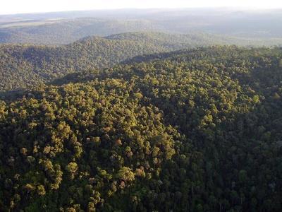 Extienden ley de deforestación cero por otros 10 años