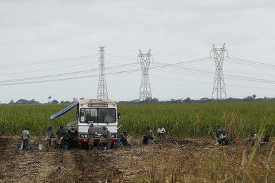 Brasil liderará a medio plazo la producción agrícola mundial, dice exministro