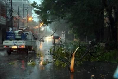 Tormentas, árboles caídos y el usual corte de energía eléctrica