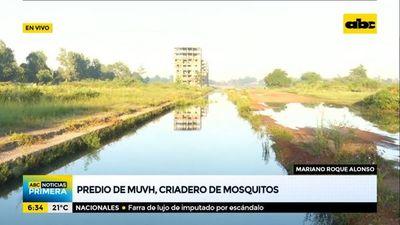 Predio del MUVH en Roque Alonso, criadero de mosquitos