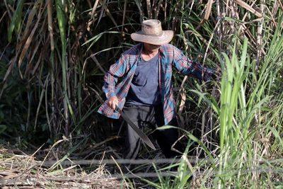 """Congreso paraguayo estudiará una """"herramienta"""" para aliviar las deudas de productores"""