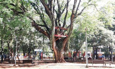 «Pesebre del árbol» en Minga recibe burlas y memes de internautas