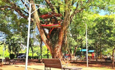 Minga Guazú: Instalan pesebre en un árbol para que no sea robado