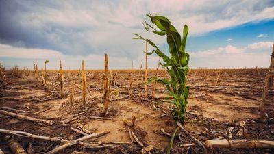 Paraguay pierde USD 237 millones cada año por eventos climáticos extremos, según BM