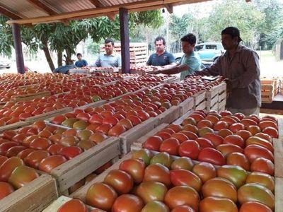 Se agudiza la puja entre productores de tomates y comerciantes del Abasto