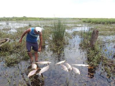 Mortandad de peces en 25 de Diciembre