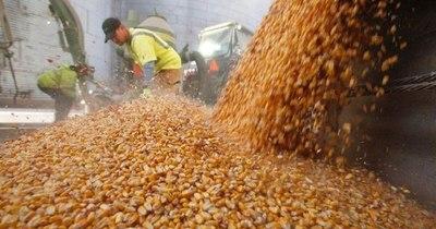 La Nación / Mejora el dinamismo de las exportaciones de maíz
