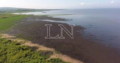 La Nación / Lago Ypacaraí: algas que aparecieron no son tóxicas, pero sigue contaminado por cianobacterias