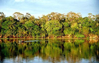 Más de 700 millones de hectáreas de bosques son en áreas protegidas