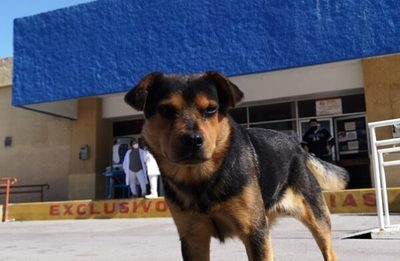 Covito, el perro que espera a su amo fallecido hace un mes