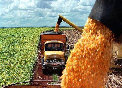 Mejora el dinamismo de las exportaciones de maíz