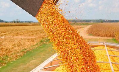 Exportación de maíz crece pese a la crisis
