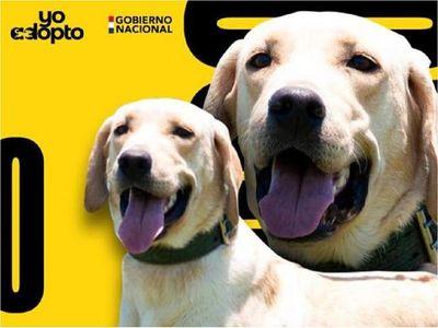 Senad busca hogar para canes antidrogas jubilados