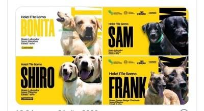 Seis canes entrenados que cumplieron su servicio en la Senad se encuentran en proceso de adopción