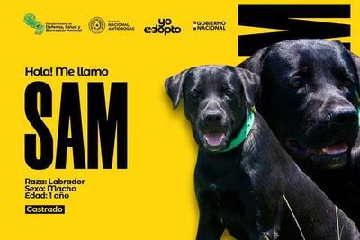 Canes de la SENAD están en busca de un hogar