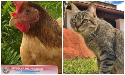 """La gallina Hortensia y la gata Clarita tienen """"cédula falsa"""""""