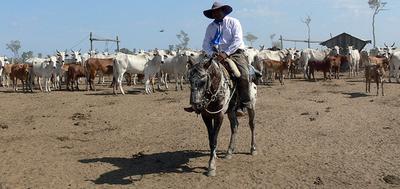 El 2020 cierra con récord en exportación de carne bovina y aumento del hato ganadero