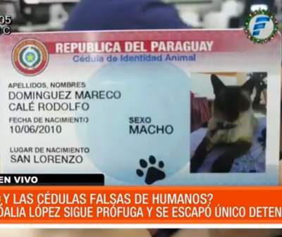 Policía se preocupa por 'cédulas' de mascotas mientras Dalia sigue prófuga