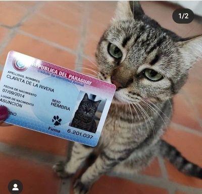 Identificaciones equipara cédulas de mascotas con las de Ronaldinho y dice querer desalentar falsificaciones