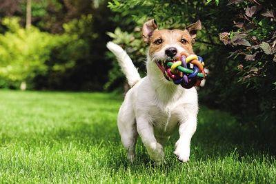 ¿Cómo proteger a nuestras mascotas de los estruendos de las bombas?