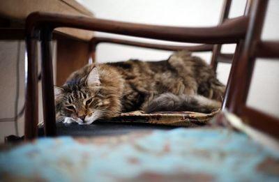 Cómo ayudar a un gato con problemas de riñones