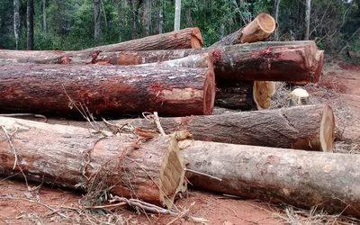 Imputan a dueño de inmueble por supuestos delitos ambientales – Diario TNPRESS