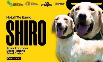 Buscan hogar para perros que sirvieron en la SENAD