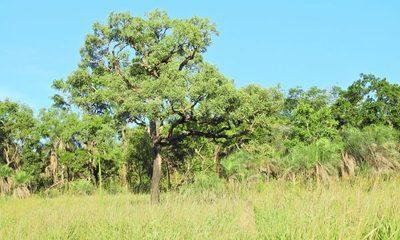 El valor de los bosques paraguayos