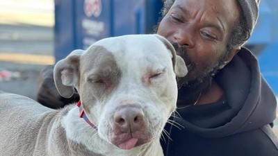 EE.UU.: Se incendia un refugio de animales y un vagabundo rescata a todos los perros y gatos
