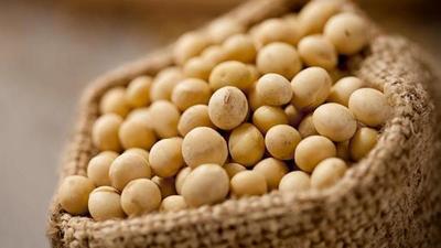 Envíos de soja generaron 33% más hasta noviembre