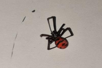 Arañas: Un peligro real que no solemos apreciar