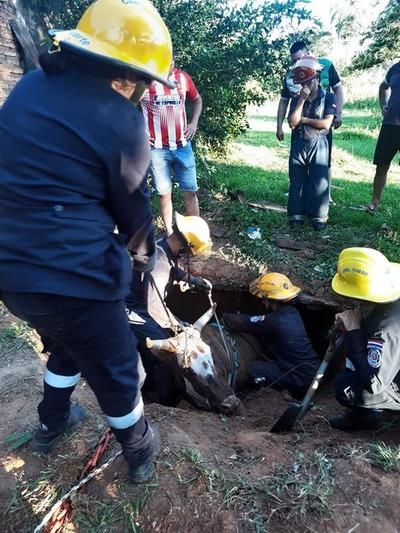 Rescatan una vaca de un pozo – Prensa 5