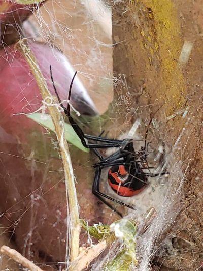 ¿Cómo actuar ante picaduras de arañas o alacranes?
