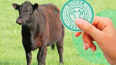 BitCow: La moneda virtual que permite invertir en ganadería llegaría a Paraguay en 2021 (es un boom en Argentina)