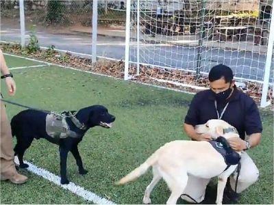 Cerca de 3.000 postulaciones para adoptar perros de la Senad